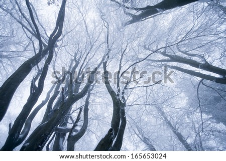 Winter fog forest - stock photo