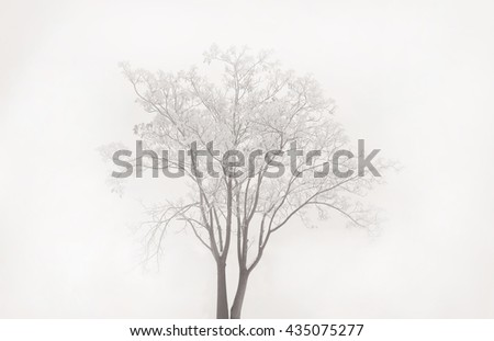 winter fog  frosted lonely tree