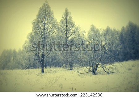 Winter foggy landscape in forest - stock photo