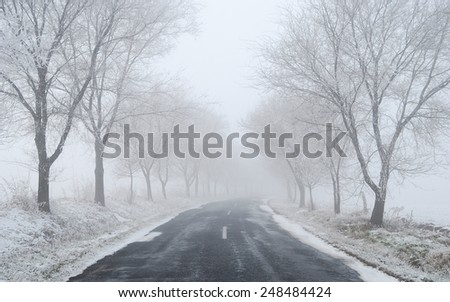 Winter foggy road with trees - stock photo