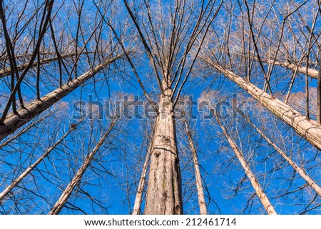 Winter forest and Blue Sky - stock photo