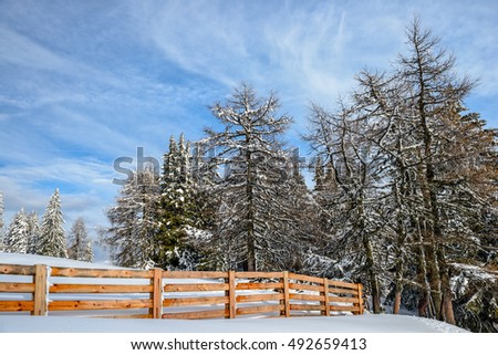 Winter forest and wood fence under cloudy blue sky
