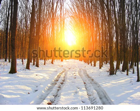Winter forest at sunrise - stock photo