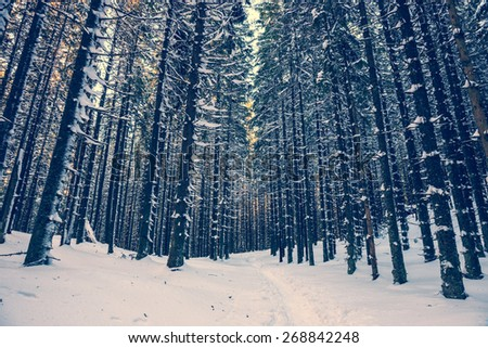 winter forest background, vintage look - stock photo