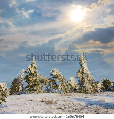 winter forest by a bright dy - stock photo