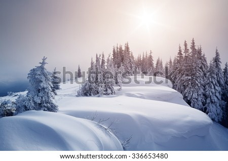 Winter forest covered with snow. New Year`s landscape. Fabulous trees in snowdrifts. Sunlight through the mist - stock photo