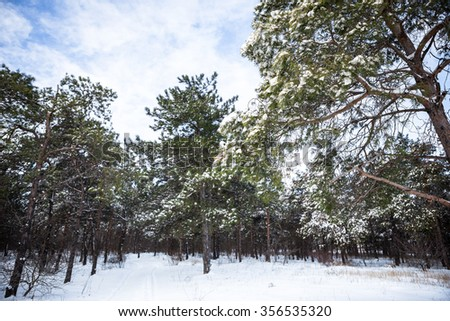 Winter forest. Firewood stacked in a pile under spruce. Snowfall. Frosty. Christmas day. Copy space. Winter background. - stock photo