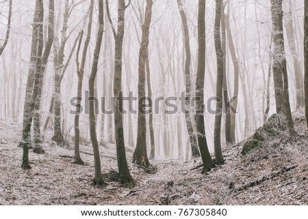Winter forest, frozen nature.