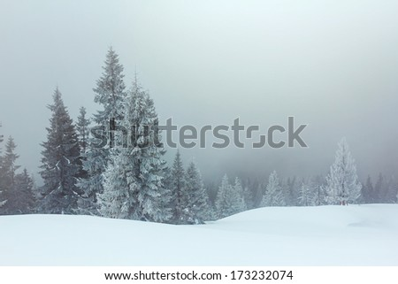 winter forest in a mist - stock photo