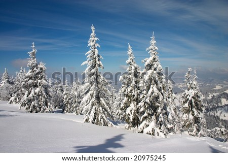 winter forest in Carpathian mountains. Blue sky with clouds