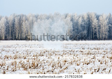 Winter forest in frost and snow on the blizzard snowstorm - stock photo