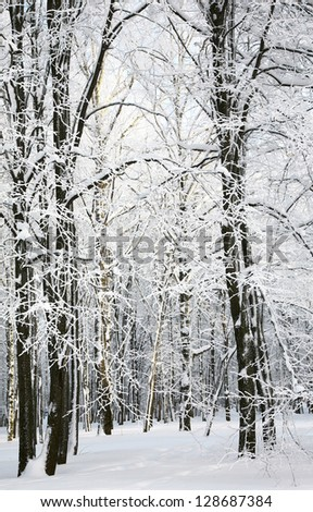 Winter forest in January