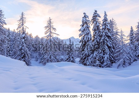Winter forest in Julia Alps near Vogel ski center Slovenia-Europe - stock photo