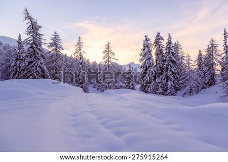 Winter forest in Julia Alps near Vogel ski center Slovenia-Europe - stock photo
