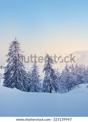 Winter forest in Julian Alps mountains in Slovenia