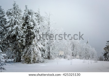 Winter forest in mountains.