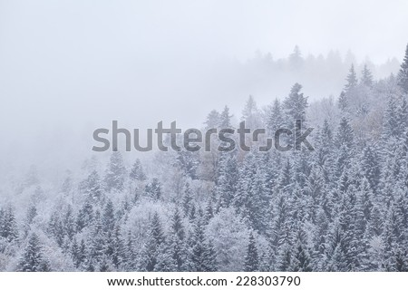 winter forest in snow and fog, Bavarian Alps, Germany - stock photo