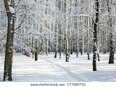 Winter forest in sunlight - stock photo