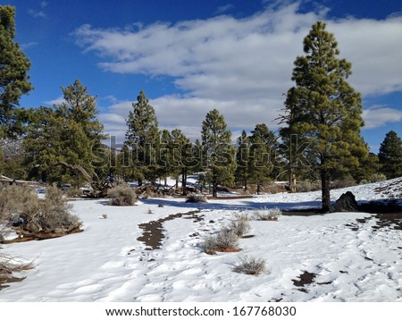 Winter forest in Sunset Crater National Monument in Arizona - stock photo