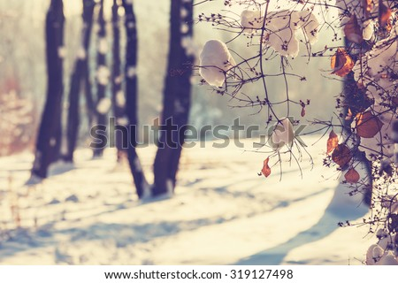 Winter forest. Instagram filter. - stock photo