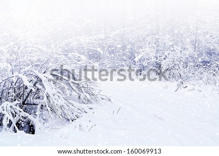 Winter Forest. Landscape.