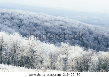 winter forest landscape - stock photo