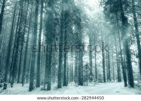 winter forest landscape monochrome - stock photo