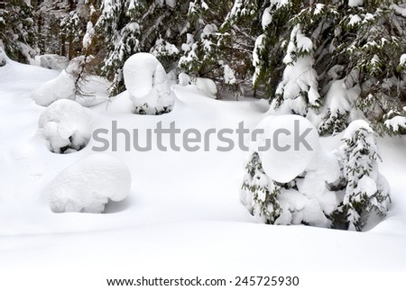 Winter forest of fir-tree. Fantastic snow figures on trees. - stock photo
