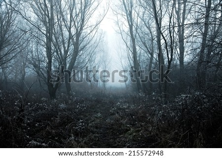 Winter forest path with frost - stock photo