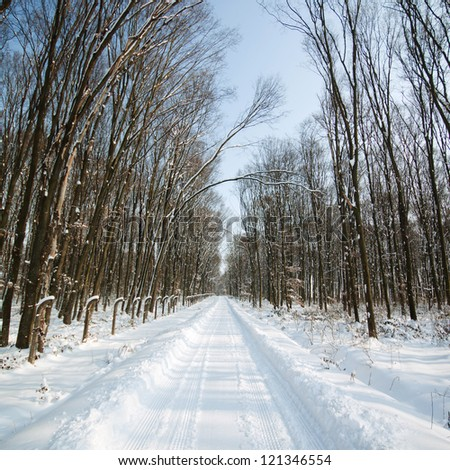 Winter forest road - stock photo