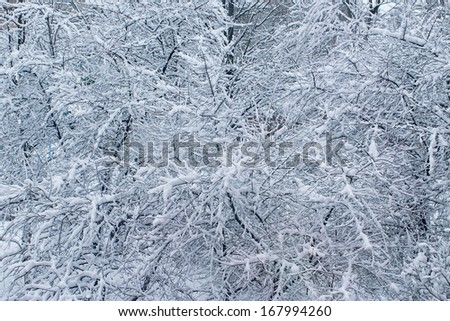 winter forest, texture