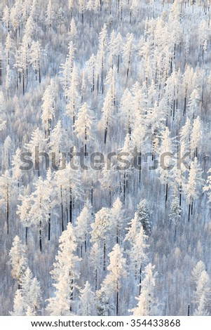 Winter forest with frosty trees, aerial view.  - stock photo