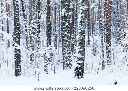 Winter forest with road covered with snow - during sunset background. Winter landscape with trees - stock photo