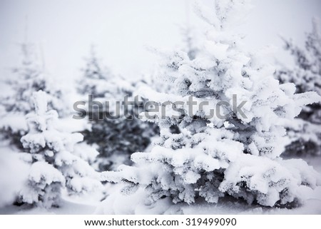 Winter forest with snow and hoar on trees  - stock photo