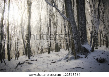winter forest with snow at sunrise