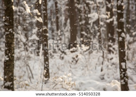 winter forest with snow covered trees