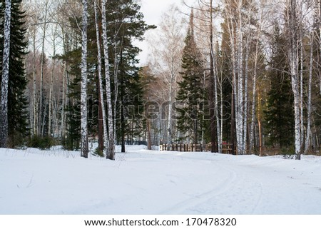 Winter forest with snow on trees - stock photo