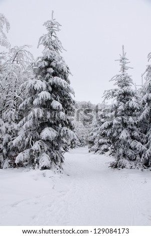 Winter forest with the snow covered path