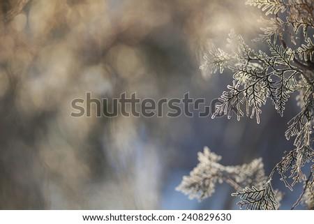 Winter framework .Frozen tree branch - stock photo
