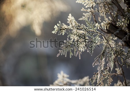 Winter framework .Frozen tree branch - stock photo