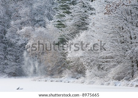 Winter, fresh, snow-flocked trees, shoreline of Hall Lake, Yankee Springs, Michigan, USA