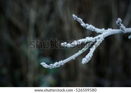 Winter frost on branches. Landscape with copy space.