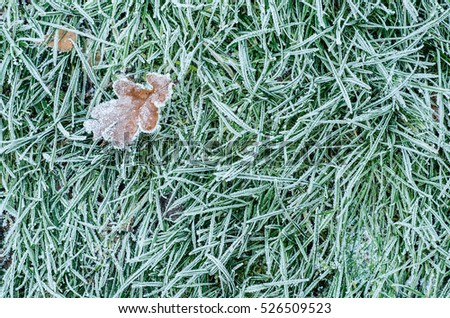 Winter frost on leaves and grass background. Landscape with copy space.