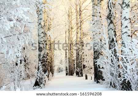 winter frozen birch woods in morning light - stock photo