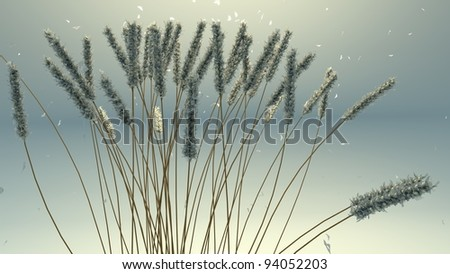 winter frozen wheat - stock photo