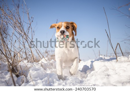 Winter fun with dog - stock photo