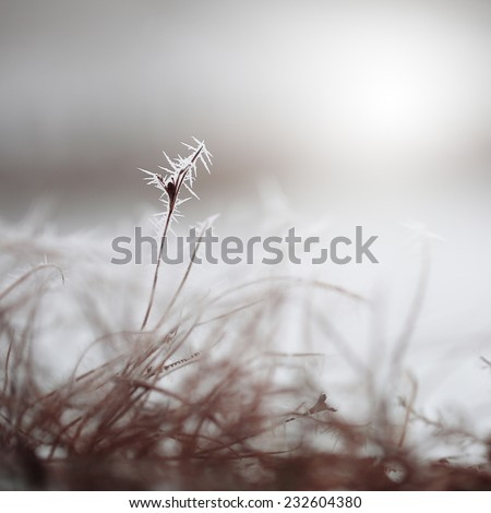 winter grass with hoarfrost. Nature background - stock photo