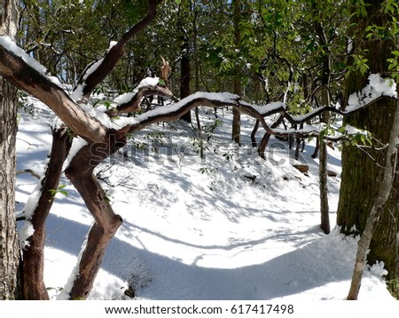 Winter Hiking At Table Rock State Park South Carolina