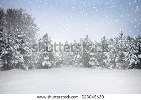 Winter holiday scene in snowing forest