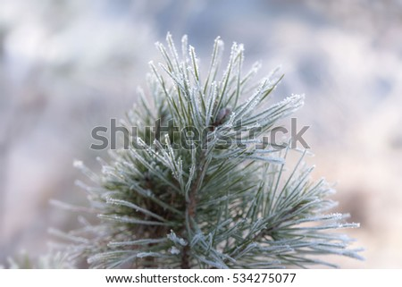 Winter ice crystals on flower closeup